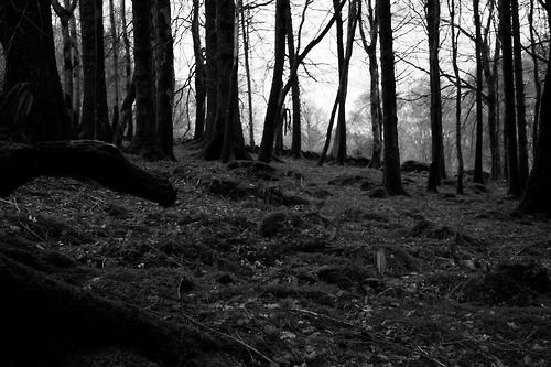 La ninfa dei boschi di Bernardino Luini