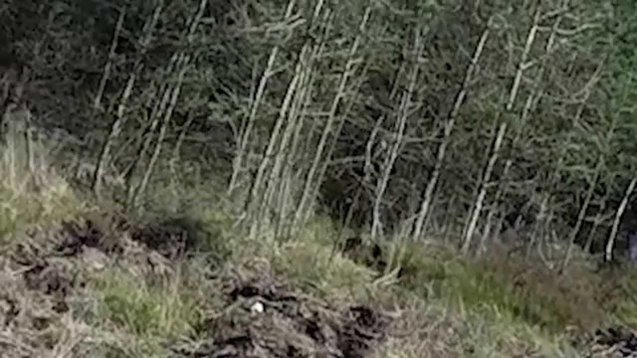 Cannock Chase, una foresta piena di mistero e fantasmi