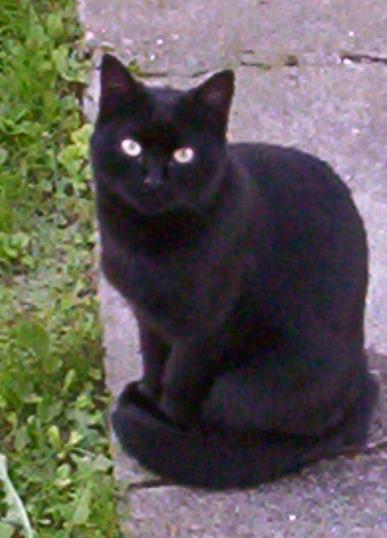 Il gatto fantasma (17 novembre, giornata del gatto nero)